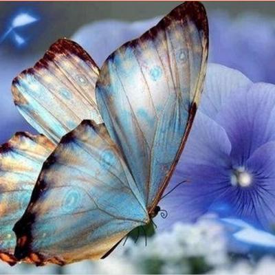 2017-blauwe vlinder op bloem met prachtige achtergrond kruissteek-handgemaakte-volledige-diamant-ambachten-foto-woondecoratie-mozaïek-diy-5d-diamondpainting