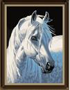 wit paard (schimmel)
