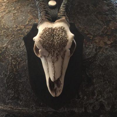 skull om de hals van een vaas