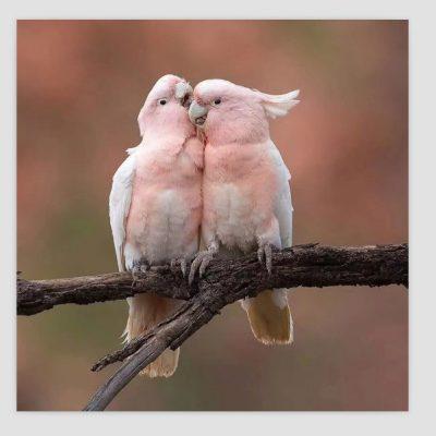 twee roze papegaaien